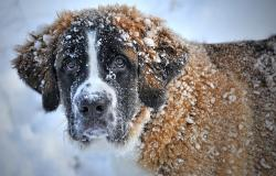 dog-in-the-snow-1168663_640
