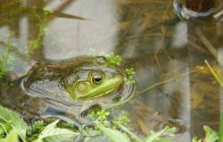 frog-314358_1280